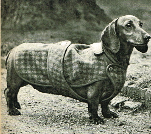 Vintage Dachshund Wiener Dog Coat Sewing Pattern Pdf Vintage