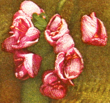 4 corsages